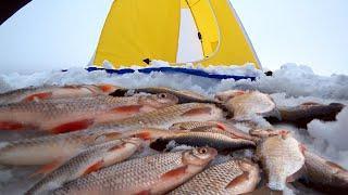 Первая зимняя рыбалка 2021г.