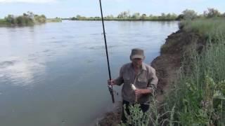 Рыбалка на реке Чу в июне